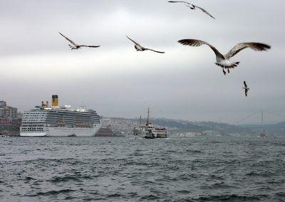 Isztambul, sirályok