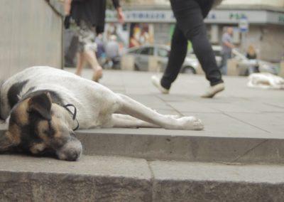 Tbiliszi, pihenő kutyák