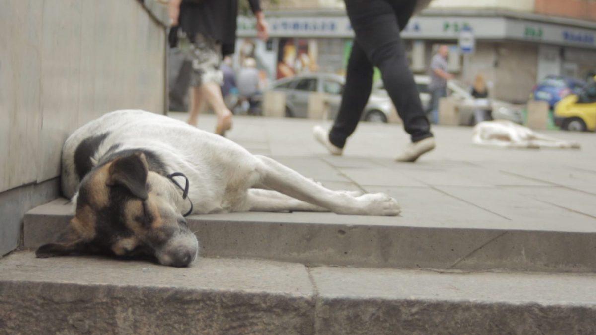 tbilisi_laying_dogs-e1492676273392.jpeg